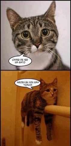 Cansou de ser gato!!  Veja mais em: http://www.jacaesta.com/cansou-de-ser-gato/