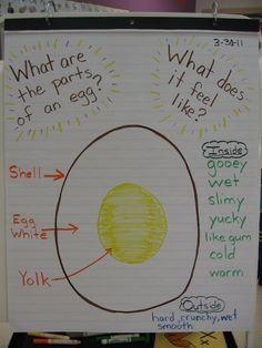 parts of an egg preschool - this blog has a lot of cool hands on teaching lessons for toddlers @Stephanie Close Brown