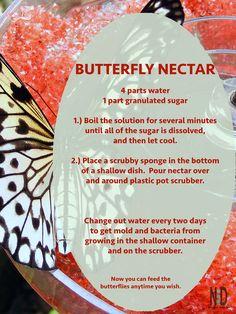 butterfly garden Butterfly Nectar Recipe I NikkiLynnDesign Butterfly Food, Butterfly Garden Plants, Butterfly Feeder, Butterfly House, Monarch Butterfly, Butterfly Flowers, Garden Yard Ideas, Garden Crafts, Garden Landscaping