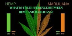 With more people looking for the benefits that come from hemp based supplements. Here are the many benefits of private label full spectrum hemp supplements. Cbd Hemp Oil, Private Label, Benefit, Nutrition, This Or That Questions, Business
