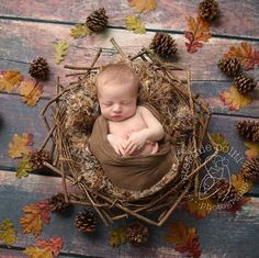 """Adorable fall-themed newborn photography will have everyone saying """"awwww!""""  Newborn Photography 