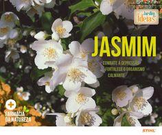 O jasmim é uma flor muito conhecida por sua beleza e aroma, mas ele também faz bem para a saúde! Conheça os benefícios do jasmim aqui na #farmáciadanatureza