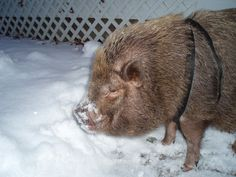 If you can't beat it, eat it! Leo's revenge against the snow.