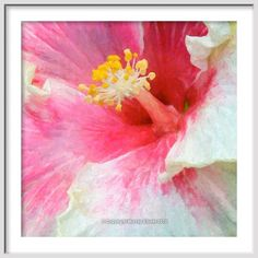 HIBISCUS FLOWER n red pink & yellow <<<<  Fine Art Floral/Flower Giclee Print on Archival Etching or Watercolor Paper