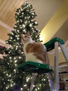 Holiday Decorating by carterse, via Flickr
