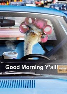 Good morning! I love this picture and I hope it makes you laugh throughout the day. Many blessings, Cherokee Billie