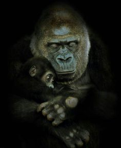 GORILLA AND BABY!