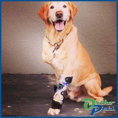 Carpus (Wrist) and Paw Brace for Dogs