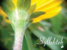 #Flores #Fotografia #Love #Syllehtek 📸