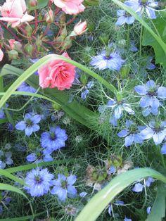 Blue and pink Garden, Plants, Pink, Blue, Garten, Lawn And Garden, Gardens, Plant, Gardening