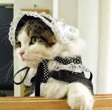 Resultado de imagen para imagenes de gatos con gorros