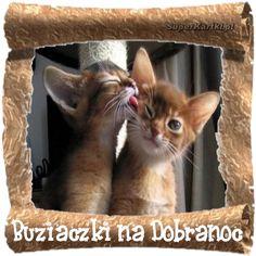 Buziaczki na dobranoc... Animals And Pets, Beautiful Pictures, Humor, Funny, Cute, Motto, Night, Humour, Pretty Pictures