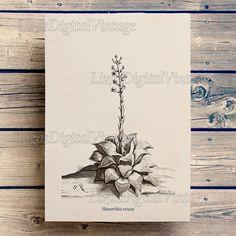#LizasDigitalVintage Illustration Digital print Botanical by LizasDigitalVintage
