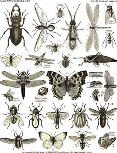 How many insects are there on Earth?