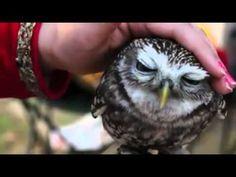 I wanna pet an owl!