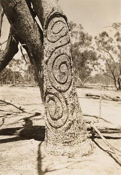 Carved trees Gamilaroi Country Bora Ground at Banaway near Mogil Mogil NSW photographed by RL Black Aboriginal Symbols, Aboriginal Dreamtime, Aboriginal Culture, Aboriginal People, Aboriginal Language, Aboriginal Painting, Australian Aboriginal History, Australian Art, Australian Aboriginals