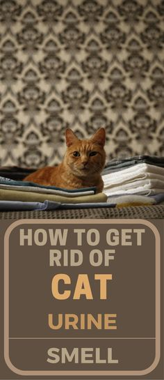 How To Get Rid Of Cat Urine Smell
