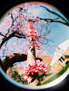 fisheye_flowers, via Flickr. By @mediageek