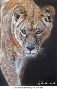 #wildlife #pastel #painting #lion #realistic