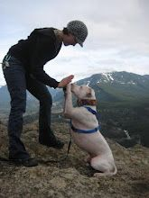 """training a deaf dog.  """"Seeing as how you can't just yell """"hey, fido!"""", you must get creative about getting your pups attention. As the joke goes """"when the dog doesn't come, the deaf dog owner 'waves louder'""""."""""""