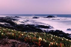 Half Moon Bay, CA - It will be so awesome to watch a sunset here with you baby Moving To California, California Love, California Coast, Places Ive Been, Places To Go, Half Moon Bay, I Want To Travel, Bay Area, Cool Pictures