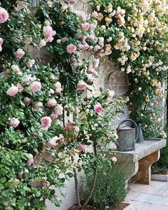 Flower Garden Projects That You Can Do It Yourself - Dream garden - Blumen & Pflanzen Small Courtyard Gardens, Small Courtyards, Small Gardens, French Courtyard, Courtyard Design, Courtyard Ideas, Balcony Design, Wall Climbing Plants, Climbing Roses