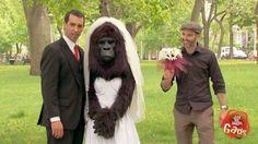 Bridezilla? No, just Gorilla Bride