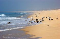 Gaivotas na Praia do Carvalhal, Troia, Portugal!