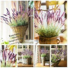 August Grove Silk Provence Lavender Stem Number of Stems: 5 Stems, Flower Color: Pink/Purple
