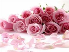 COLLIGE, VIRGO, ROSAS (coge muchacha las rosas)
