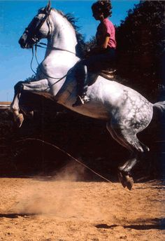 Bettina Drummond talks about Mr. Nuno Oliveira and why he was such a great trainer and rider. Levante La Ballotade '90