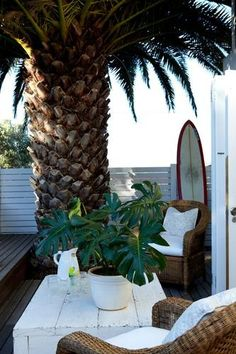 Who needs a roof on the deck when you have a spectacular palm like this..