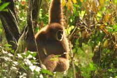 Gibbon Rehabilitation Project - Thalang District - Reviews of Gibbon Rehabilitation Project - TripAdvisor