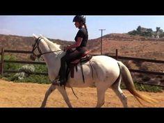 ▶ Marcha Batida in the Mangalarga Marchador horse - YouTube