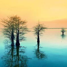 Louisiana swamp ~