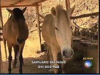 """""""O GRITO DO BICHO"""": Abrigo que acolhe animais vítimas de maus-tratos p..."""