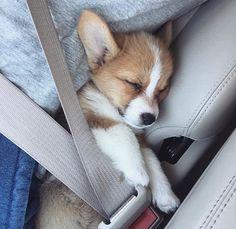 All occupants must wear seatbelts.....