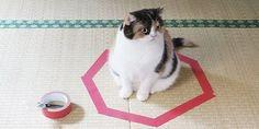 Por que os gatos entram no círculo?