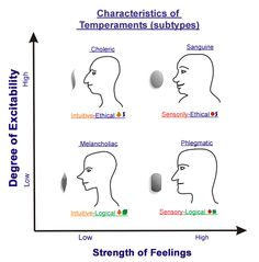 65 Best Concepts Four Temperaments Images In 2019 Human Personality Personality Profile