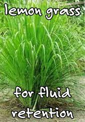 Lemongrass has been used to treat: #Bladder infections, respiratory/#sinus infection, #digestive problems, #parasites, torn ligaments/muscles, connective tissue issues, #fluidretention,#varicose veins, & #salmonella.