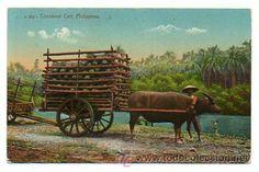 PHILIPPINES. FILIPINAS. CARRETA DE TRANSPORTE DE COCOS. (Postales - Postales Extranjero - Asia - Filipinas)