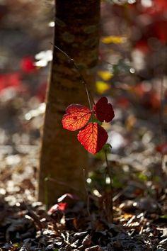 Clark's Turning Leaf - Nicholas Trandahl