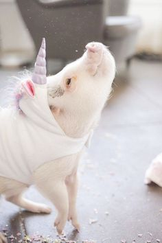 Check this out - Pigs In Space #visit