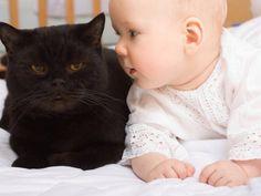 """""""O GRITO DO BICHO"""": Gatos podem ajudar a prevenir asma e alergias em c... #ogritodobicho #falabicho"""