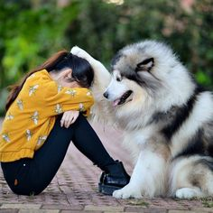 Ideas for funny animals husky dogs Animals And Pets, Baby Animals, Funny Animals, Cute Animals, Cute Puppies, Cute Dogs, Dogs And Puppies, Doggies, Funny Dog Pictures