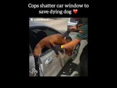 Cops shatter car window to save dying dog