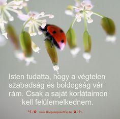 Hálát adok a mai napért. A Nagy Utazás... Isten teremtett hozzá távlatokat és lehetővé tette, hogy szárnyaljak. Tudatta, hogy a végtelen szabadság és boldogság vár rám. Csak a saját korlátaimon kell felülemelkednem. Így szeretlek, Élet!  ╰⊰⊹✿ Köszönöm ♡ Szeretlek εїз Ho'oponoponoway ✿⊹⊱╮ www.HooponoponoWay.hu Life Quotes, Christian, Bible, Quotes About Life, Quote Life, Living Quotes, Quotes On Life, Christians, Life Lesson Quotes