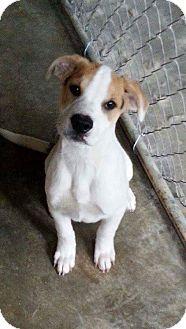 West Bend, WI - Boxer Mix. Meet Luke, a dog for adoption. http://www.adoptapet.com/pet/14510961-west-bend-wisconsin-boxer-mix