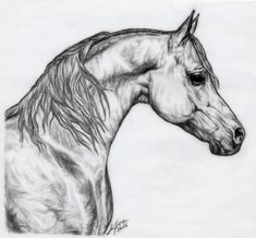 A drawing based on an arabian stallion called Never Again. One of my favs among all my works. Not perfect at all but something I'll never be able to do again.