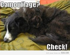 funny pictures cat dog camouflage - Funny cats and dogs pics! Funny Cats And Dogs, Cats And Kittens, Funny Animals, Cute Animals, Funny Kittens, Baby Kittens, Funny Pictures With Captions, Dog Pictures, Animal Pictures
